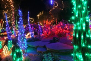 out door cactus garden with lights