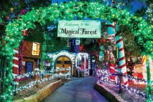 Magic forest display