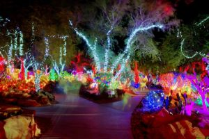 garden holiday lights